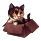 3587-calico-cat-in-the-box
