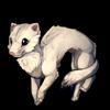 456-winter-ferret