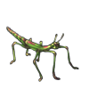5110-new-growth-phasmid