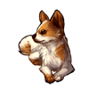 725-fluffy-chihuahua
