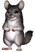 212-23-chinchilla