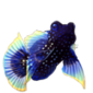 2653-star-mandarinfish