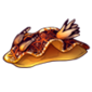 Lava-nudibranch