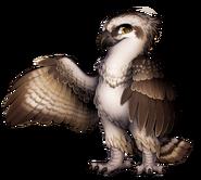 Raptor Osprey