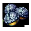 551-mandrake-seed