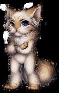 Cat-persian