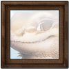 644-forum-vista-bearded-dragon