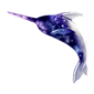 5030-galaxy-narwhal