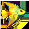 604-tropical-angelfish