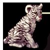625-white-tiger-cub