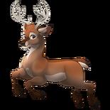 Feral Deer