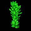 489-seaweed-vine