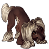 3417-choconilla-crested-pup