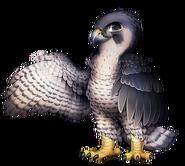 24-9-peregrine-falcon