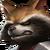 Rocket Raccoon Uniform I