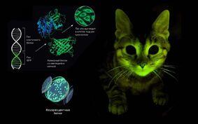 07 fluori cat.original