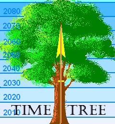 a technology tree is a bundle of timelines they originate from one path as if a single timeline but then break into different timelines in much the same