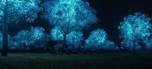 Биолюминесцентные деревья