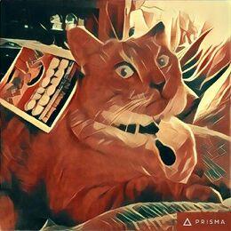 Prisma (app) image of a cat