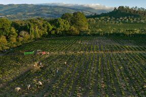 Кофейная плантация в Коста Рика