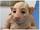 Human Cloning: 2049