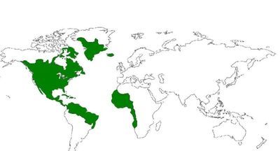 American Empire's greatest extent