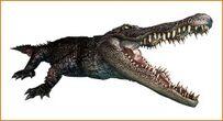 262px-Alligator ene