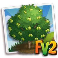 Malabar Plum Tree