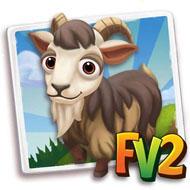 Mini Corsican Goat