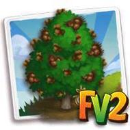 Heirloom Turkish Hazelnut Tree