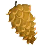 Korean Pine Nut