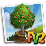 Elder Pixie Mandarin Tree