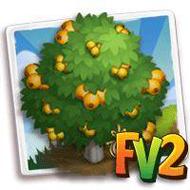 Heirloom Loquat Tree