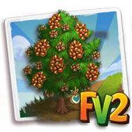 Heirloom Pinon Tree