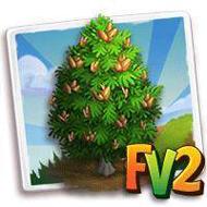 Heirloom Siberian Pine Tree