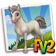 Baby Gray Criollo Horse