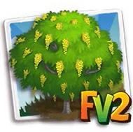 Cassia Tree