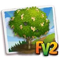 Brazilian Ironwood Tree