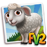 Baby White Dorper Sheep