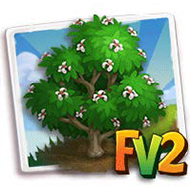 Zen Magnolia Tree