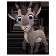 Baby Alpine Ibex