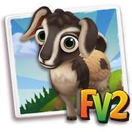 Baby Arapawa Goat