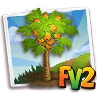 Sunrise Papaya Tree