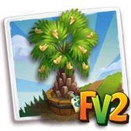 Elder Carnauba Palm Tree