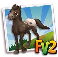 Baby Black Appaloosa Horse