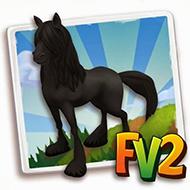 Black Gypsy Vanner Horse