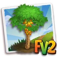 Maradol Papaya Tree
