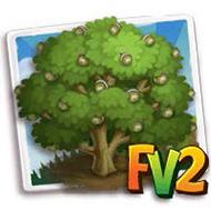 Possum Oak Tree