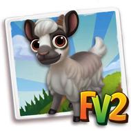 Baby Valgerola Goat