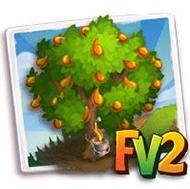 Field Maple Tree